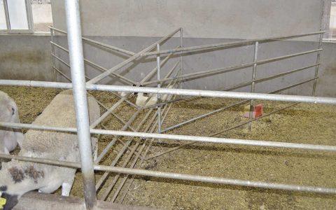 养羊场各种栅栏-养羊设备