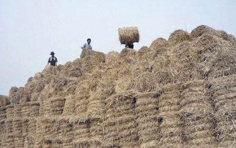 养羊怎么把干草长期储存- 养羊饲料加工技术