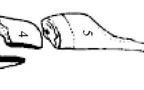 羊胴体剖分及图片