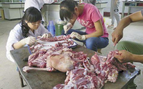 羊肉产肉性能测定