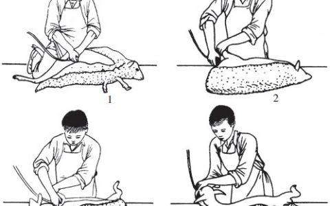 剪毛的时间(细毛羊和半细毛羊、粗毛羊每年什么时间剪羊毛)